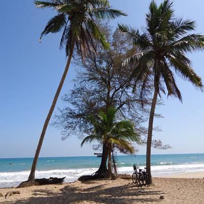 Bild aus Sri Lanka Palmenstrand